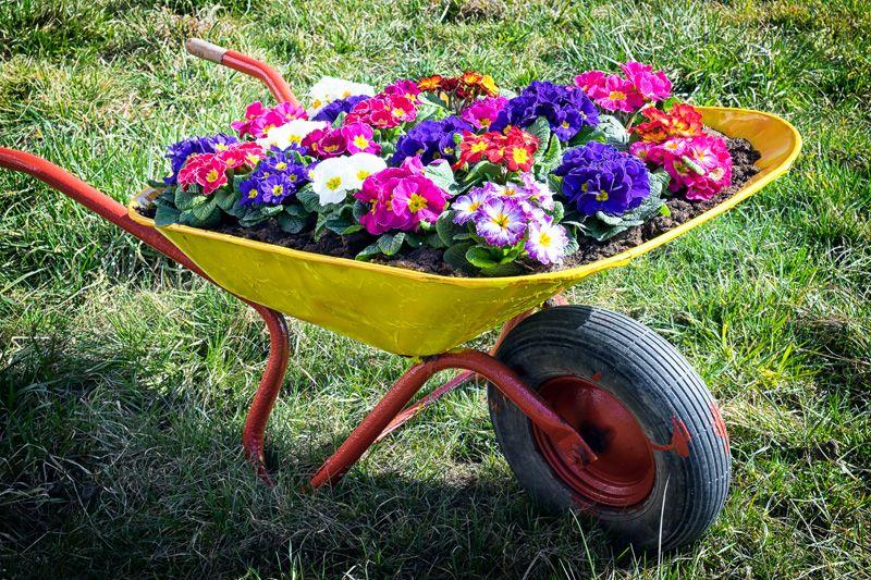 Wheelbarrow pictures