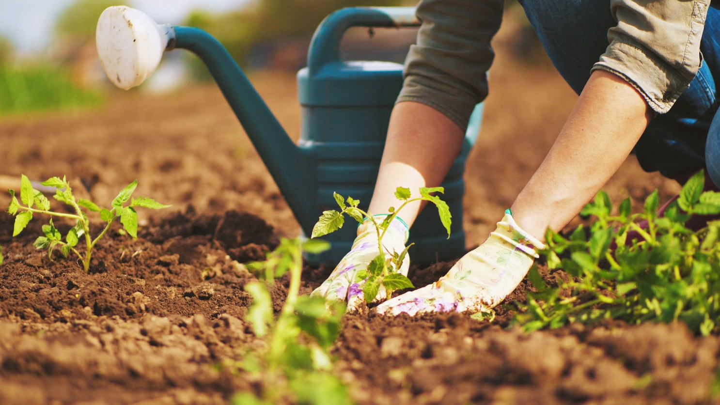 71 Astonishing Gardening Quotes By Famous People | Vilee