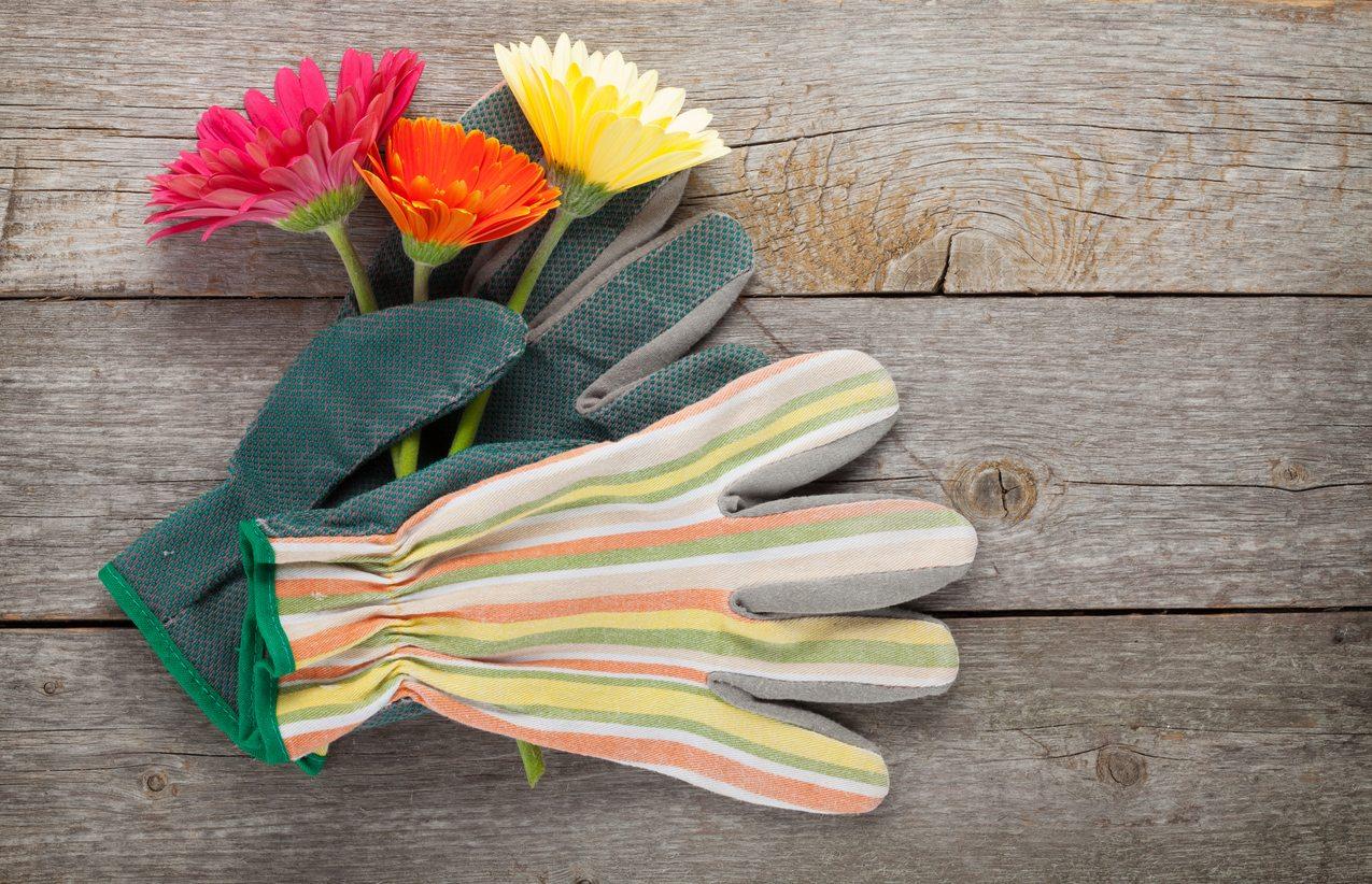 Garden Gloves pictures