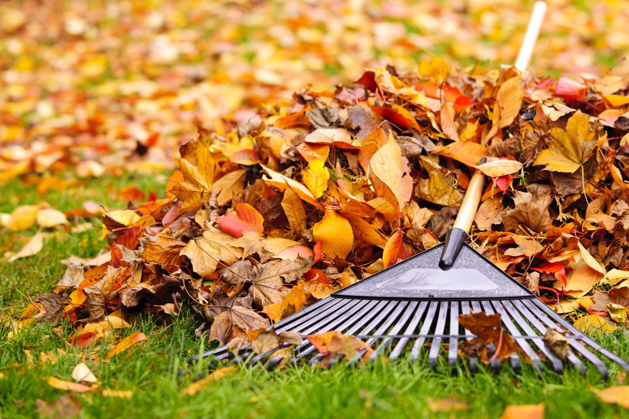 leaf rake pictures